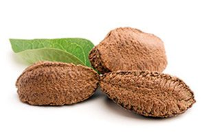 brazil nut and leaf