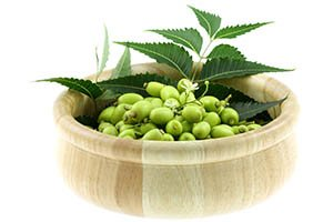 neem leaves and berries in wooden bowl