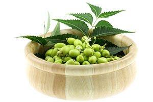 feuilles et baies de neem dans un bol en bois