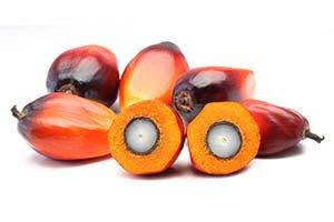 fruit de palmier rouge