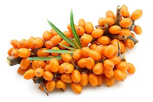 Sea buckthorn berries branch