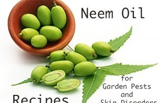 neem leaves and fruit