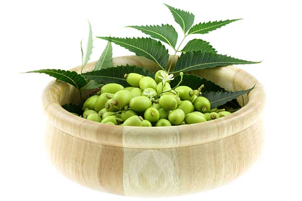 bowl of neem berries