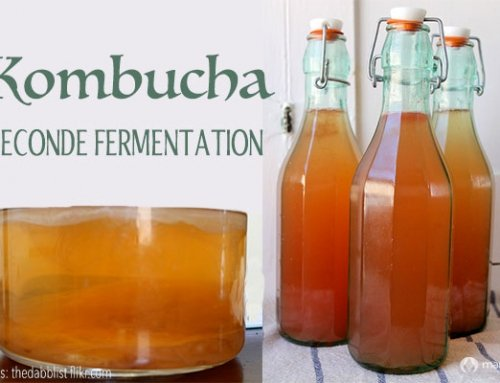 Kombucha Seconde Fermentation