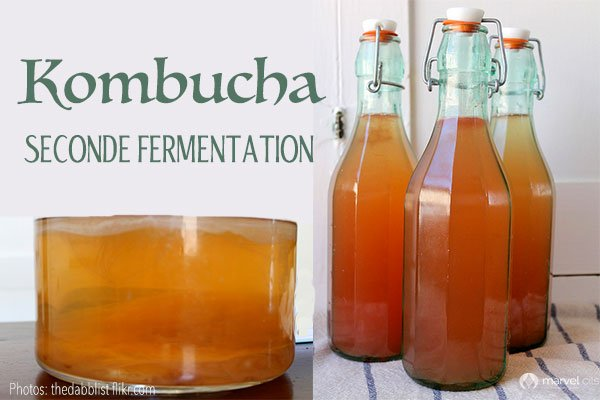 Kombucha Seconde Fermentation