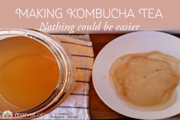 kombucha and scoby