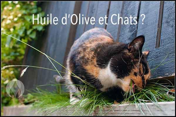 Que pouvez-faire d'autre avec l'Huile d'Olive ?