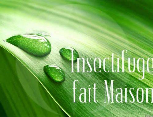 Comment Faire un Insectifuge Naturel ?