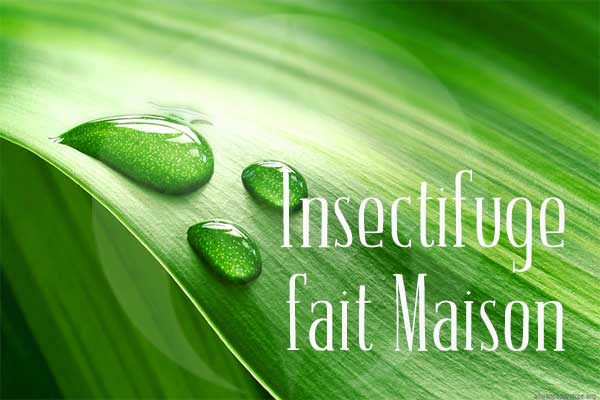 Comment Faire un Insectifuge Naturel ?