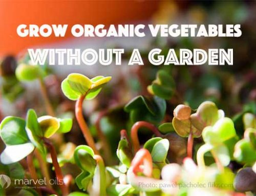 Grow Organic Vegetables without a Garden