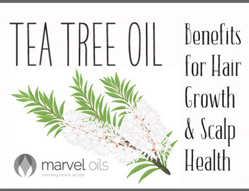 Tea Tree Oil Benefits for Hair Growth & Scalp Health