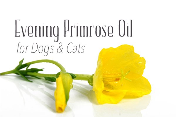 Benefits of Evening Primrose Oil for Dogs & Cats