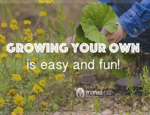 Growing organic food – anyone can do it!