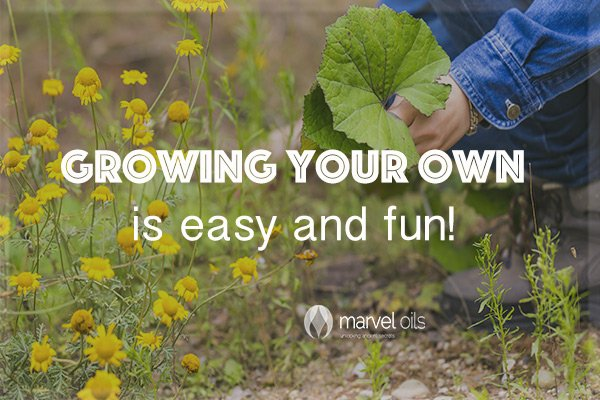 Growing organic food – anyone can do it!